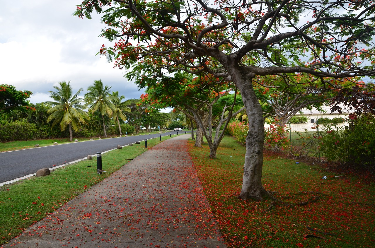 Driving in Fiji - renting a car, hiring a tax or using public buses