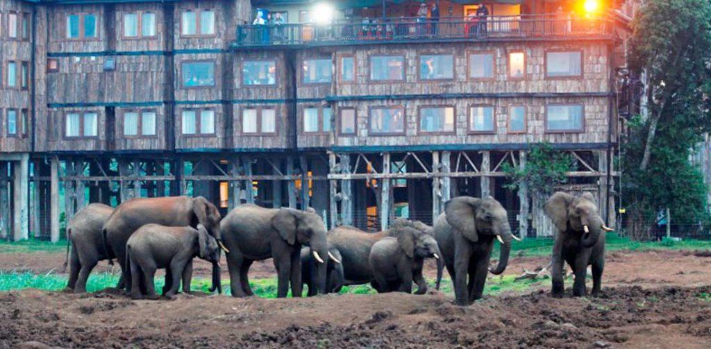 Elephants at the Serena Mountain Lodge, Kenya & Tanzania, Africa Safari