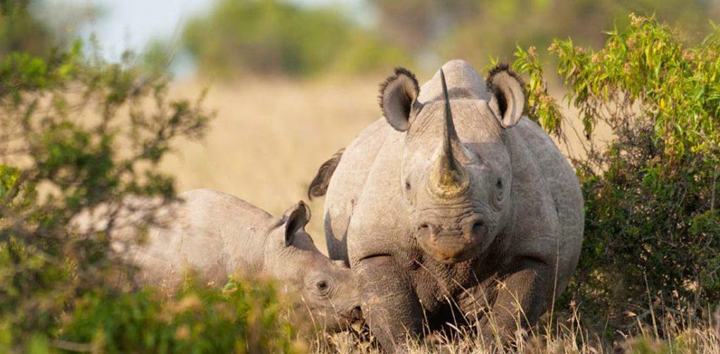 Rhinos, Serena Mountain Lodge, Kenya & Tanzania, Africa Safari