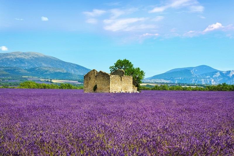 Valensole plateau, Provence France