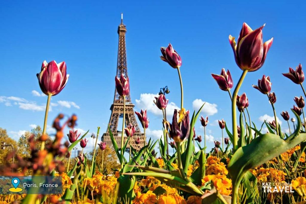 Eiffel Tower with Tulips, Paris, France in Springtime
